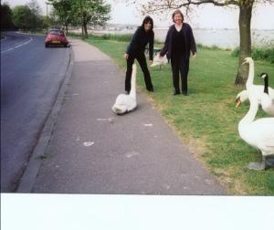 รูปฉันและ Penny ฝูง Swans เมือกลับไปเยี่ยม ที่ Colchester, Essex ,England